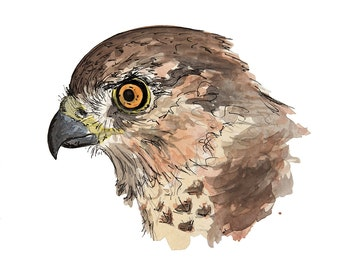 Crazy Cooper's hawk: watercolor print