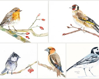 5 birds POSTCARDS, a set of 5 Unique postcards from wonderful watercolour illustrations, robin bird,tit, wall decoration, kids, home decor
