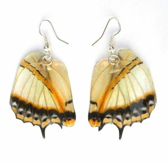Real Butterfly Wings Earrings Handmade Unsual Jewelry Gift