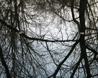 Reflection of Branches Photography Print