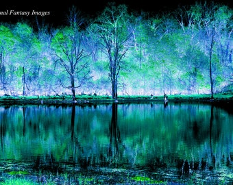 Mystic Forest Photo
