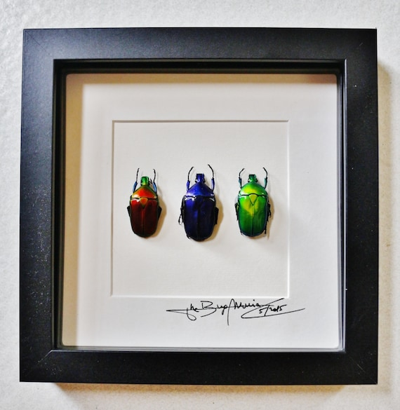 Artframe with real insects : Topquality display with beautiful trio of flowerbeetles