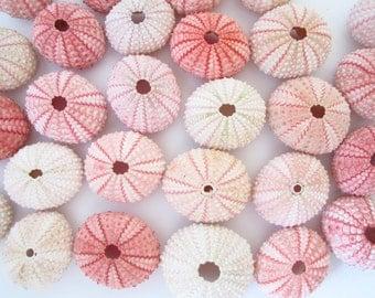 50 Pink Sea Urchin-Beach Wedding Favors-Pink Sea Urchin Bulk-Air Plant Shell-Beach Wedding Decor-Sea Urchin-Sea Urchin Bulk-Sea shell bulk