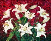Lilies - Limited Edition signed Fine Art Giclée Print.