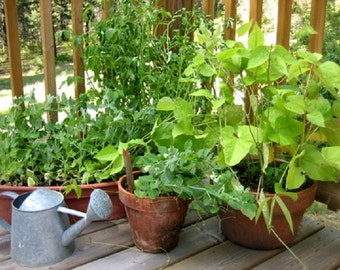 Organic Heirloom 15 Varieties Container Garden Survival Vegetable and Herb seed Kit  Great for small spaces