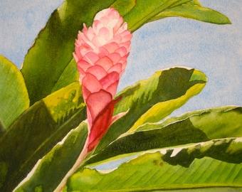 Print, Ginger Flower Watercolor