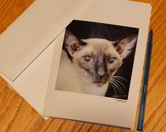 Seal Point Siamese Cat Photo Card