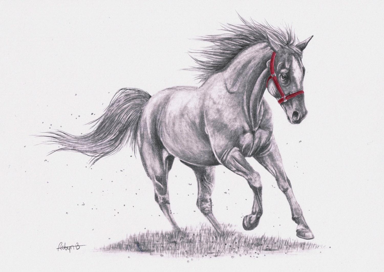 original graphite pencil drawing horse horse running horse - photo#18