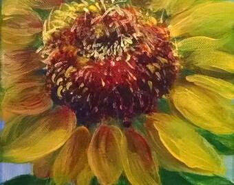 large sunflower closeup