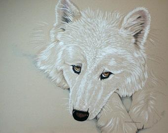 Original pencil illustration White wolf, mixed media, Rous dog animal wildlife gift