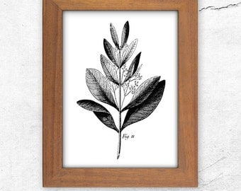Printables, Printable, Botanical, Print, Botanical Art, Flower Print, Home Decor, Printable Art, Black White Print, Wall Decor