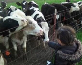 COWS FEEDING COWS