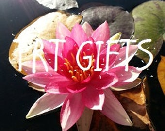 Pink Water Lily *Digital Download*