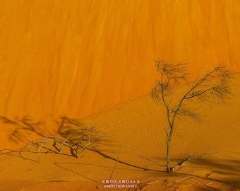Sand and Tree, Jalapão colors, Jalapão Desert, Brazil