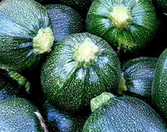 Organic Zucchini seeds, dark green round Zucchini heirloom seeds, home grown Ronde De Piacenza squash seeds, 10 seeds