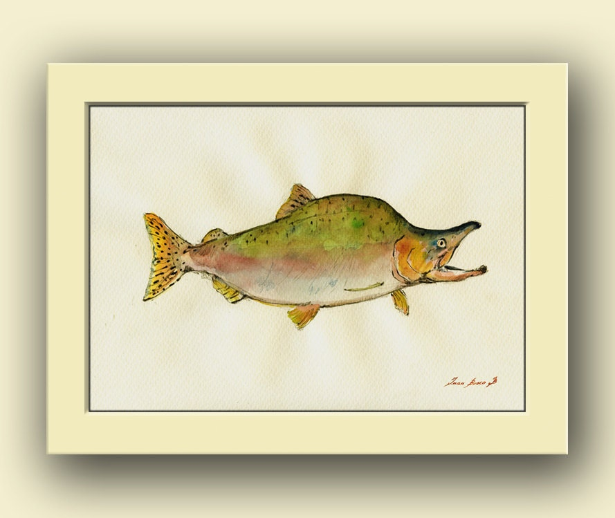 pink salmon fish fish watercolor animal decor salmon fly unique gifts for the fly fisherman fly fishing fly