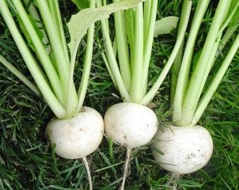 50 Turnip White Lady Seeds, NON-GMO + Free Gift