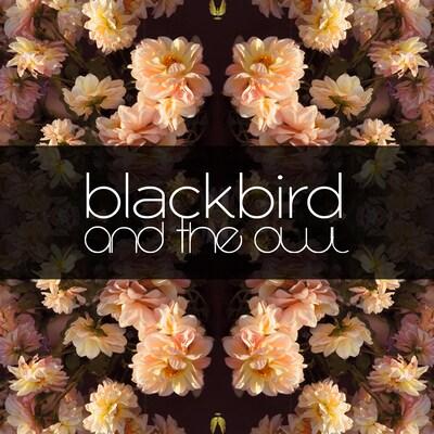 blackbirdandtheowl