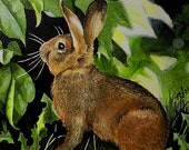 Cottontail Bunny Rabbit in a Garden Melody Lea Lamb ACEO Print #168