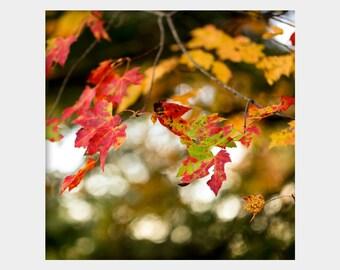 Fall Leaves Wall Art, Autumn Leaves Photo, Red Orange Green Art, Nature Photograph, Blue Ridge Georgia, Bokeh Nature Art, Nature Wall Art