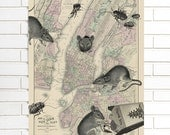 Vintage Map Wall Art, Rats and Roaches, New York City, Wood Bound Canvas