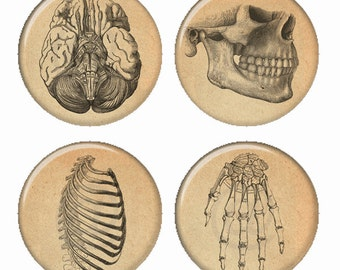 Vintage Anatomy Bones Illustrations Magnets or Pinback Buttons or Flatback Medallions Set of 4