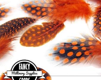 20 - Orange / Black - Guinea Feathers