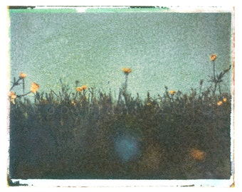 Polaroid transfer - Meadow