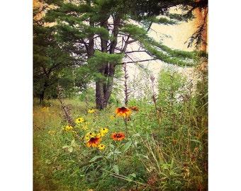 Homestead Field Flowers - Vintage Art Prints - Fairfield Maine - nostalgic photo art