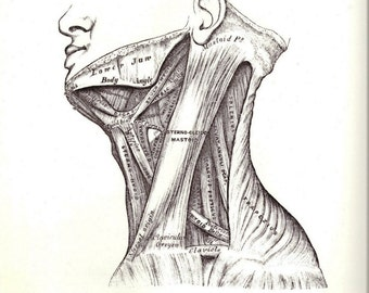 Neck Muscles or Bones of the Right Foot on the Reverse Side of the Page Gray's Anatomy, Human Anatomy to Frame or for Paper Arts PSS 2416