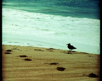 SALE: summer beach photography ocean waves calm beach footprints in the sand Mexico travel photography seabird dreamy seascape 8x8 print