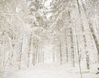 Winter white, winter snow, snowfall, snowflakes, bare trees, winter wedding, white wedding, falling snow, skiing, forest, snow, fallen snow