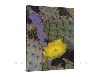Prickly Pear, Purple Cactus Photo, Blue Cactus Art, Cactus Flower, Framed Canvas, Vertical Art, Photo on Canvas, Picture Gift, Home Decor