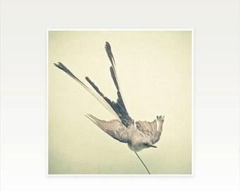 SALE 30% OFF Swallow Art, Bird Photography, Rustic Wall Art, Neutral Colours - Bird Study No.1