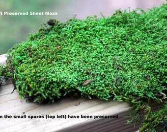 Mood moss-Sheet Moss-PRESERVED Moss Samples-Small snack Bag of Assorted sheet moss and mood moss