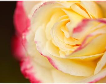 Pink & Yellow Rose Flower Fine Art Canvas wrap