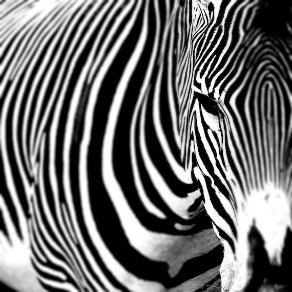 The Zebra Eye - black and white Window To The Soul of A Lovely zebra love Farm autumn Nature decor zoo travel Fine Art Photo Print 8x8
