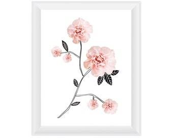 Carnation Branches 8.5x11. Fine Art Photographic Natural History Print. Minimalist. Natural Home Decor. Indoor garden botanical.