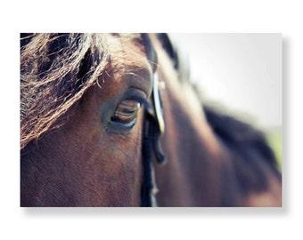 Horse Close Up Photograph, Brown Horse Portrait, Horses Eye Print, Rustic Horse Photo, Close Up of Horses Eye, Brown Horse, Farmhouse, 8x12