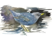 Limited Edition GICLEE MINI Print / Watercolor painting of an American Dipper