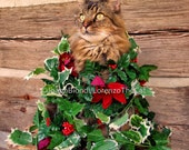Vine Christmas Card