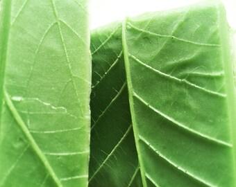 Clean Green Soap - Leaves Soap - Bath Soap - Bar Soap
