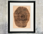 Engraved Wood Wall Art - Woodgrain Tree Ring Home Decor- Scientific Illustration