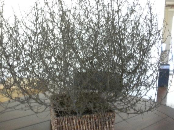 Tumbleweed Rustic Decor 27x27x22 Tumble weed