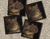Squirrel Portrait Coasters - Squirrel Coaster Set - Cocktail Drink Bar Coasters