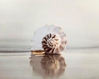 """Sea Shell Photography, Beach Wall Art Beige Neural Colors, Seashore, Coastal Wall Art, Seashell Print """"Reflecting Seashell"""""""