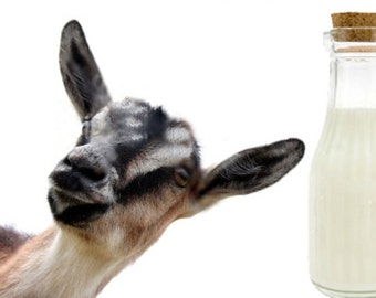 GOAT'S MILK LOTION for Women ~ 8 oz ~ Nourishing Vitamins ~ Organic Botanicals ~  Infused Hand/Body Lotion ~ Deep Absorbing ~ Non- Greasy