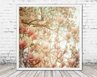 pastel pink magnolia decor - flower photography - magnolia tree print - floral wall art