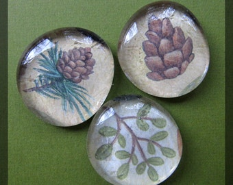 Glass Pebble Magnets -  Pine forest, Outdoors, Wild, Set of 3 -- Kitchen Magnets - Office Decor - Magnet