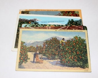 6 Vintage California Orange Postcards Used